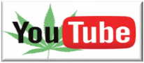 You Tube - one of the best Cannabis Seed Growing Resources available! See our video timelapse Double Big Bud